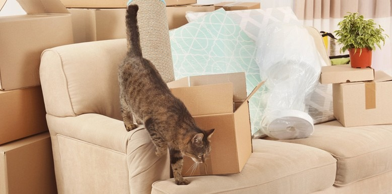 9 Weird But Useful Tips for Moving With a Cat